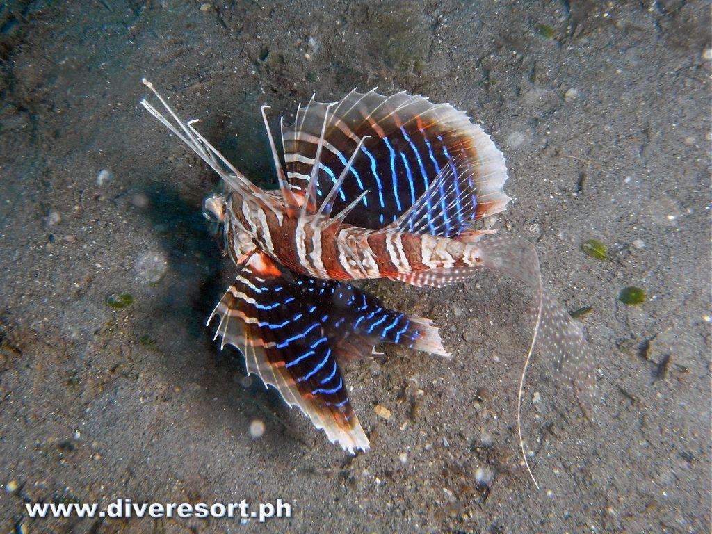 Scuba Diving 111