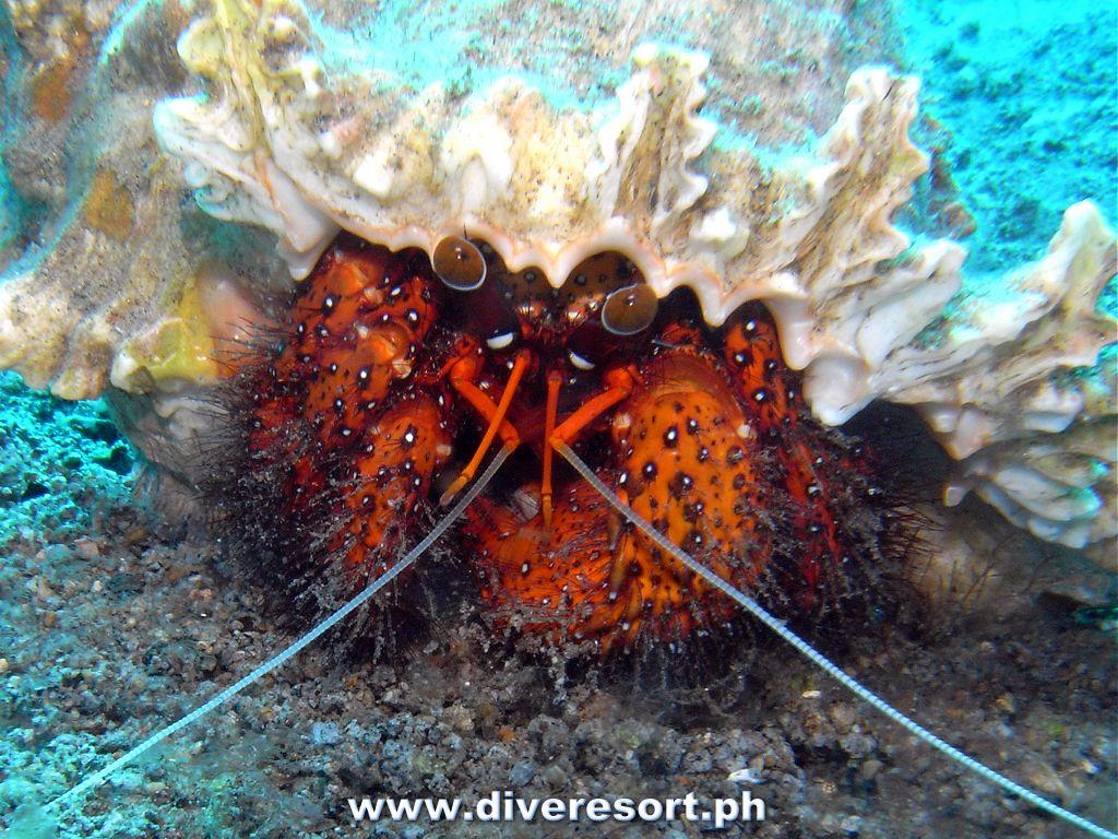 Scuba Diving 117