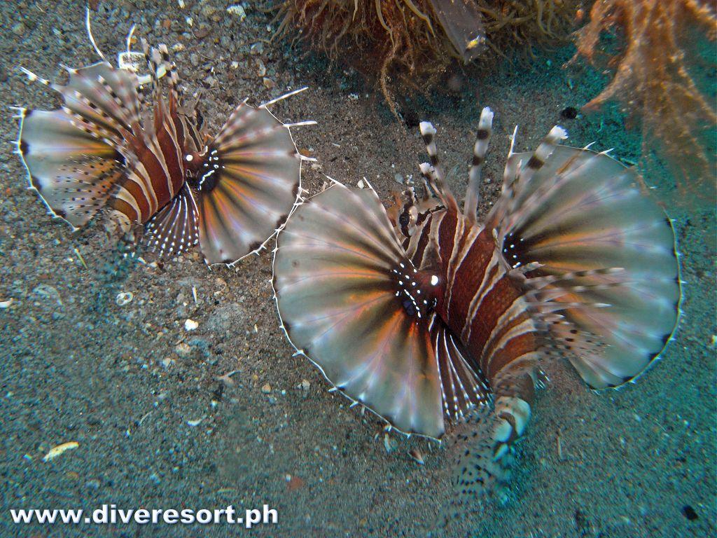Scuba Diving 118