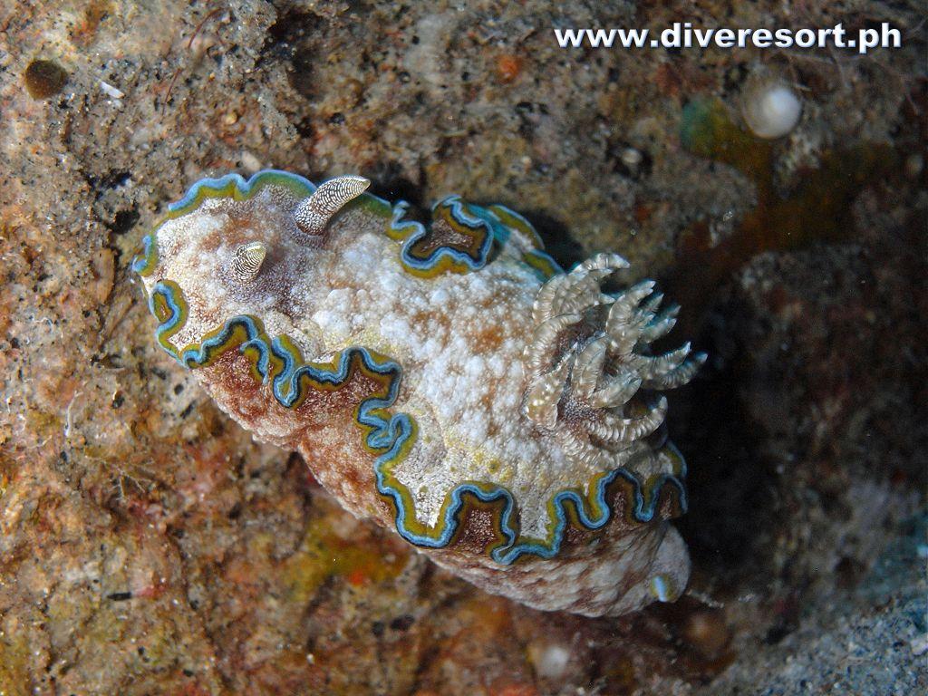 Scuba Diving 126