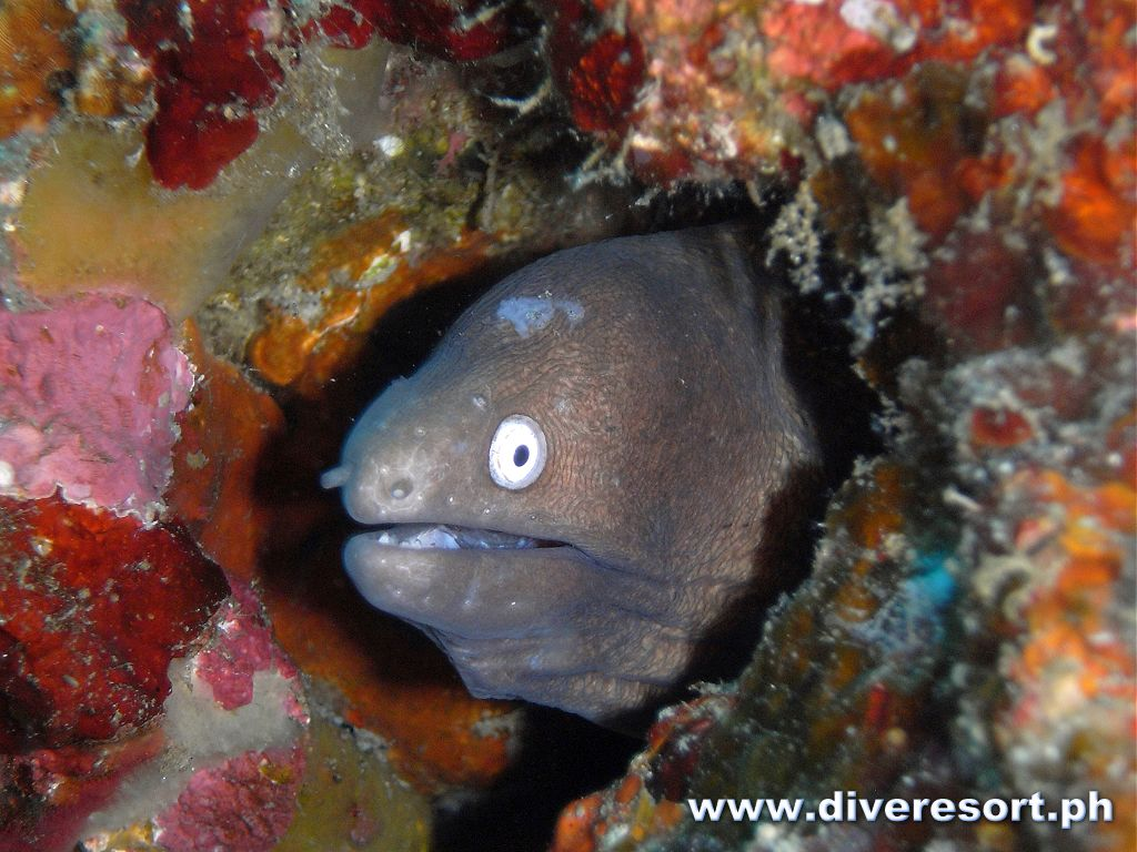 Scuba Diving 127