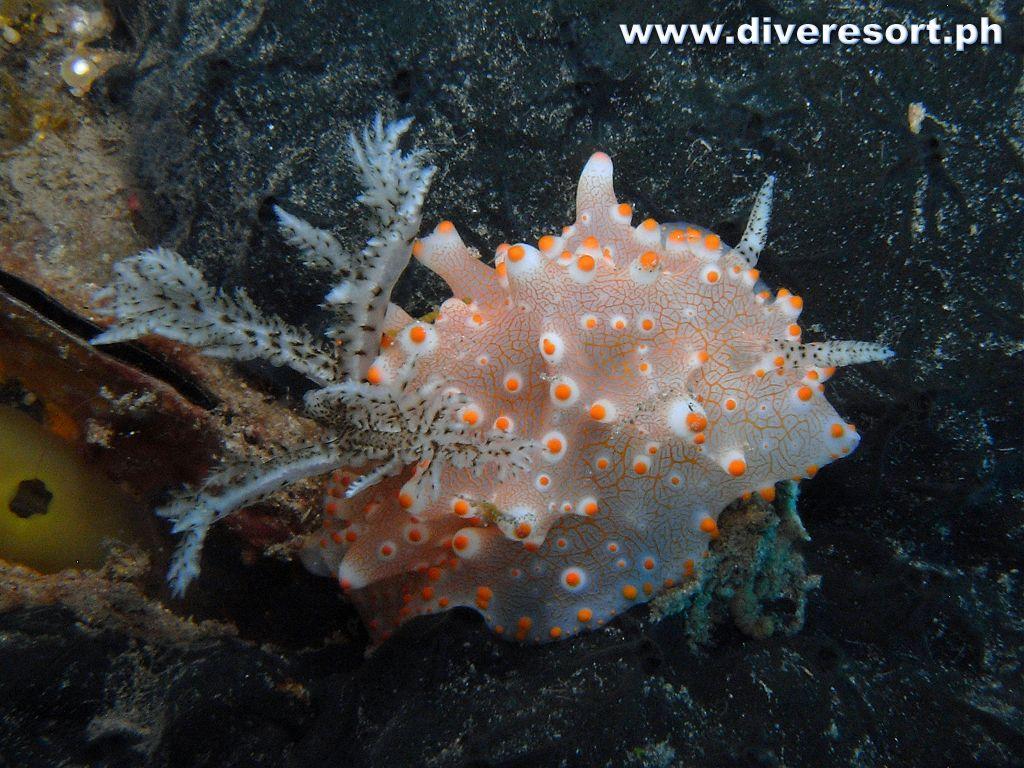 Scuba Diving 130