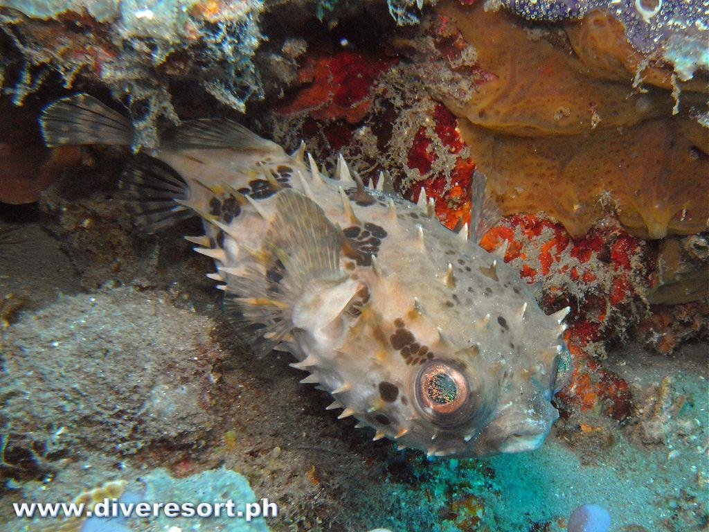 Scuba Diving 75