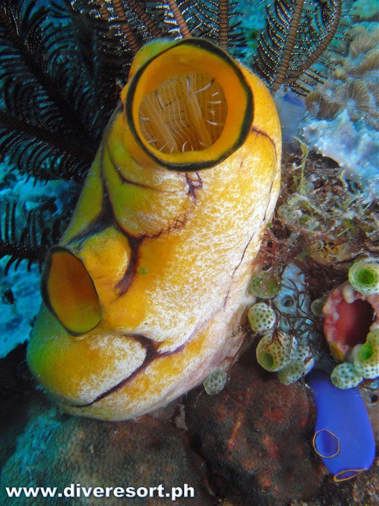 Scuba Diving 76