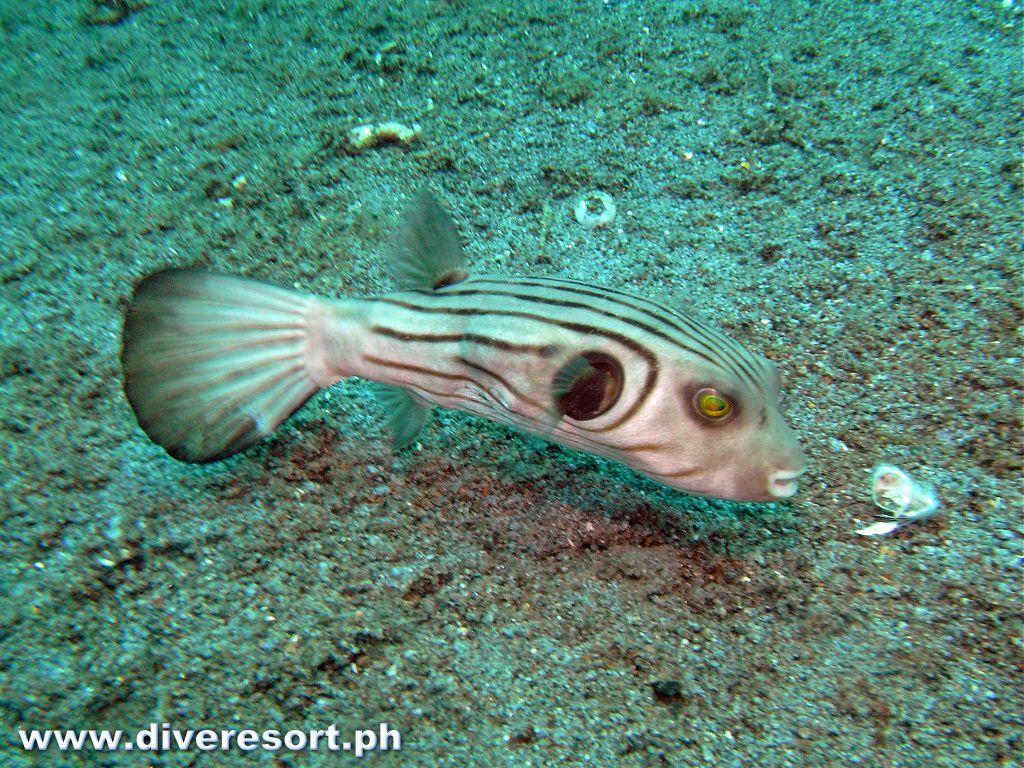 Scuba Diving 81