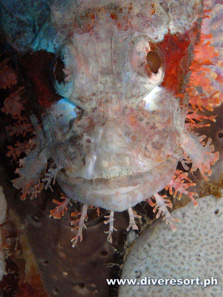 Scuba Diving 93