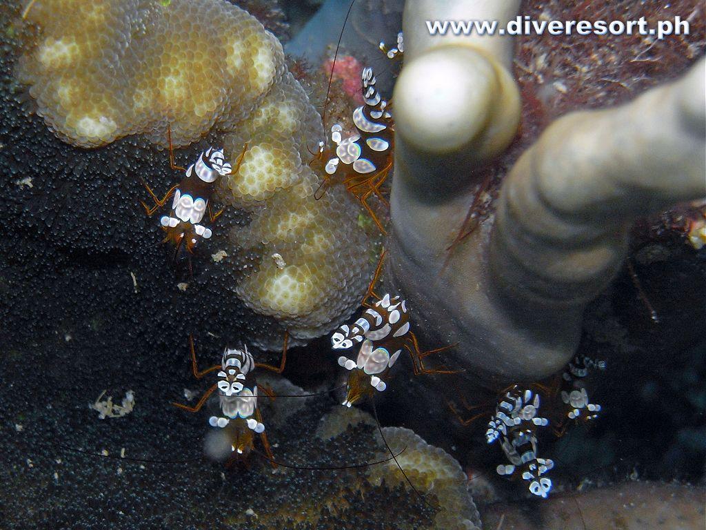 Scuba Diving 99