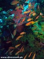 Scuba Diving 100