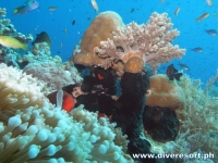 Scuba Diving 103