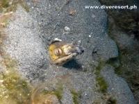 Scuba Diving 106