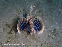 Scuba Diving 110