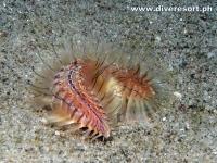 Scuba Diving 113