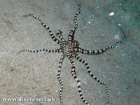 Scuba Diving 115