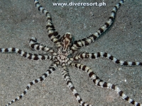 Scuba Diving 116