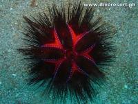 Scuba Diving 120