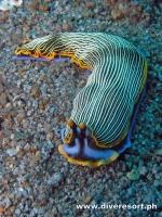 Scuba Diving 121