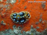 Scuba Diving 125