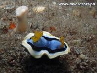 Scuba Diving 133