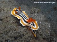 Scuba Diving 134