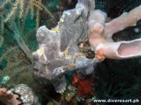 Camiguin Scuba Diving 140
