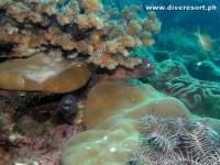 Camiguin Scuba Diving 141