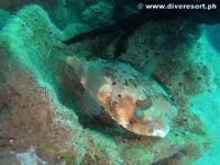 Camiguin Scuba Diving 144