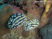 Camiguin Scuba Diving 146