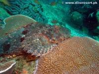 Camiguin Scuba Diving 153