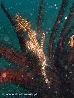 Camiguin Scuba Diving 155