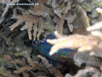 Camiguin Scuba Diving 160