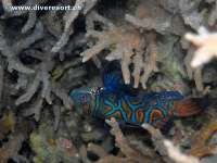 Camiguin Scuba Diving 161
