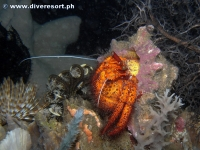 Camiguin Scuba Diving 164