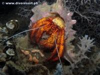 Camiguin Scuba Diving 165