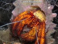 Camiguin Scuba Diving 166
