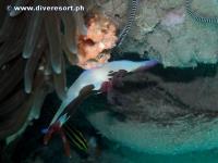 Camiguin Scuba Diving 168