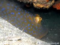 Camiguin Scuba Diving 169