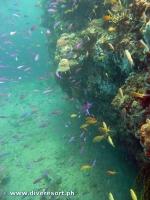 Camiguin Scuba Diving 172