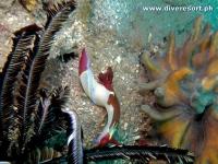 Camiguin Scuba Diving 176