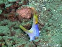 Camiguin Scuba Diving 177