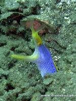 Camiguin Scuba Diving 178