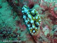 Camiguin Scuba Diving 179