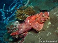 Scuba diving Moalboal 001