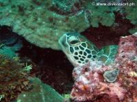 Scuba diving Moalboal 009