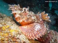 Scuba Diving 19