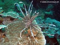 Scuba diving Moalboal 010