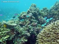 Scuba diving Moalboal 011