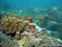 Scuba diving Moalboal 012