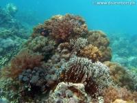 Scuba diving Moalboal 013