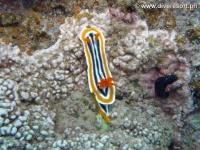 Scuba diving Moalboal 014
