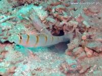 Scuba diving Moalboal 020